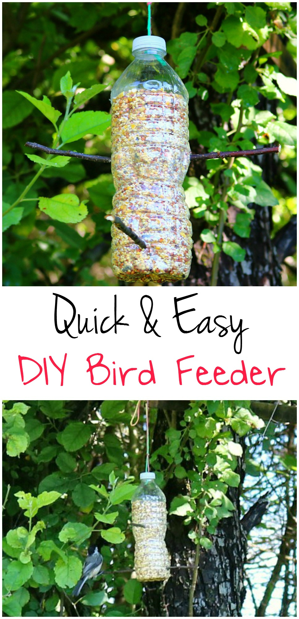DIY Bird Feeder | Kid craft | Kids Activity | Bird Study Unit