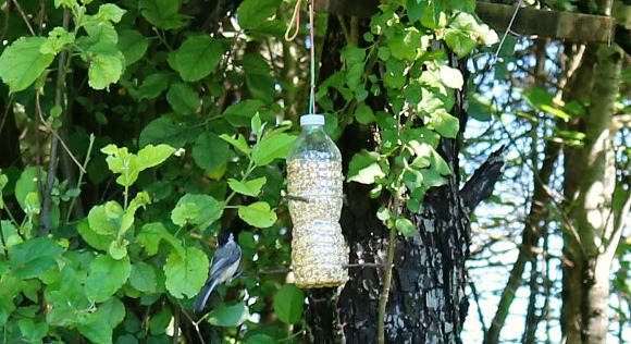 bottle bird feeder final 4
