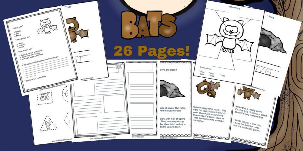 bat-unit-study-1000x500