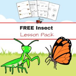 Free Insect Worksheets